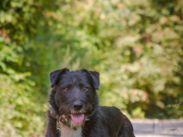 Отдам в дар: Чудесный пес Берт в добрые руки фото2