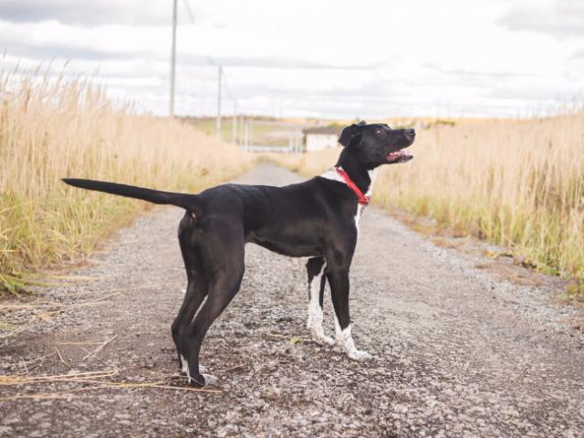 Отдам в дар: Чудесная собака в добрые руки фото3