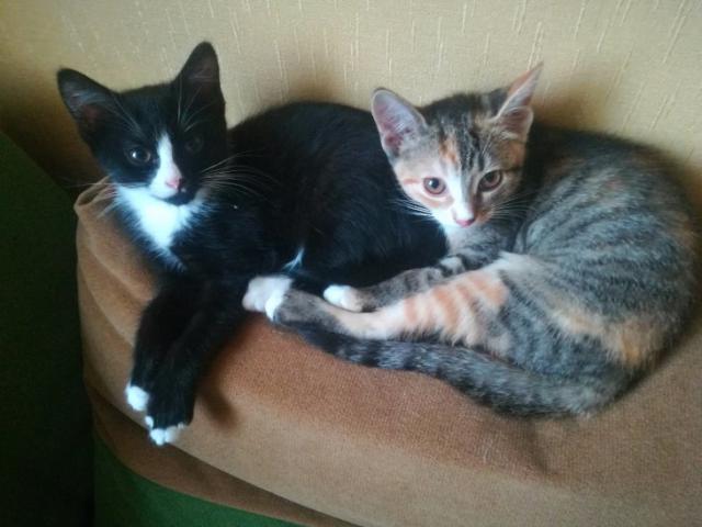 Отдам в дар: Очаровательные котята в добрые руки, в дар