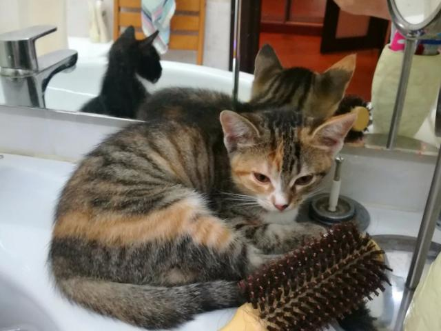 Отдам в дар: Очаровательные котята в добрые руки, в дар фото3