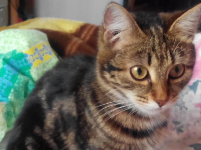 Потерялся/Нашелся: Потерялась кошка