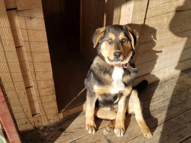 Отдам в дар: Очаровательный щенок Боря в добрые руки фото2