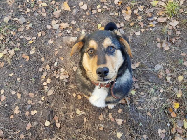 Отдам в дар: Очаровательный щенок Боря в добрые руки фото3