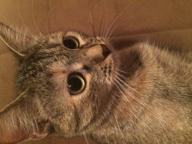 Отдам в дар: Отдам в хорошие руки Кошечку фото2