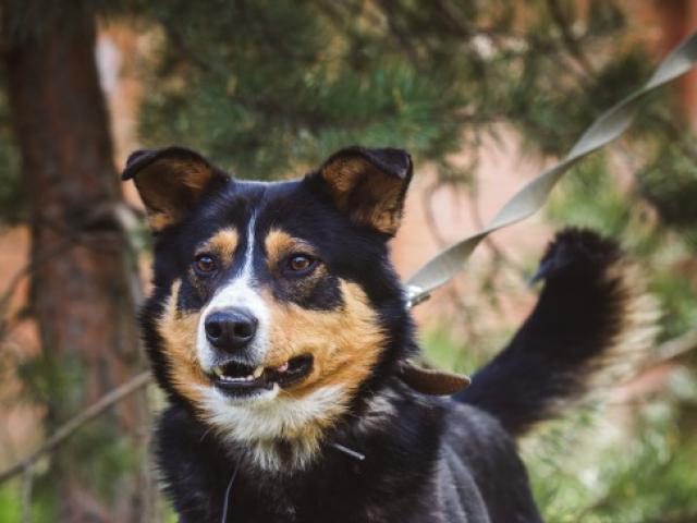 Отдам в дар: Красивый пес в добрые руки  фото2