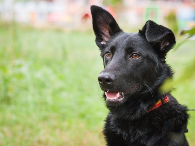Отдам в дар: Красивый пес Кекс в добрые руки