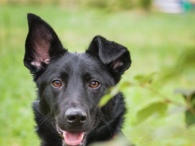 Отдам в дар: Красивый пес Кекс в добрые руки фото2
