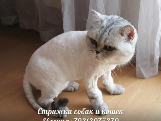 Предлагаю услуги: Стрижка собак и кошек, выезд на дом фото2