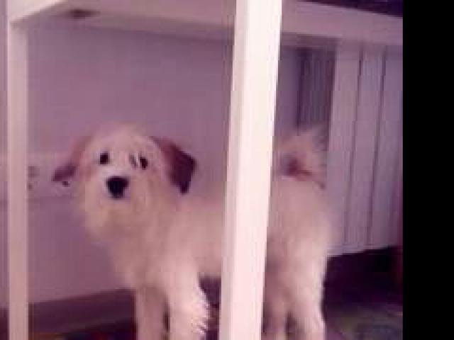 Потерялся/Нашелся: Потерялась собака