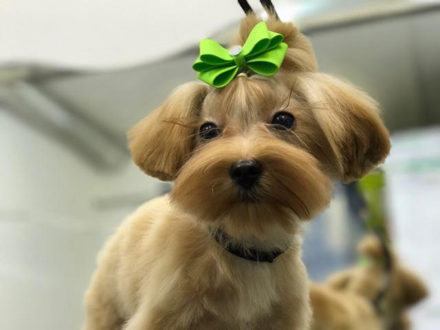 Предлагаю услуги: Стрижка собак в Петергофе