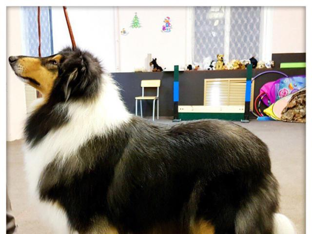 Предлагаю услуги: Стрижка собак в Петергофе фото3