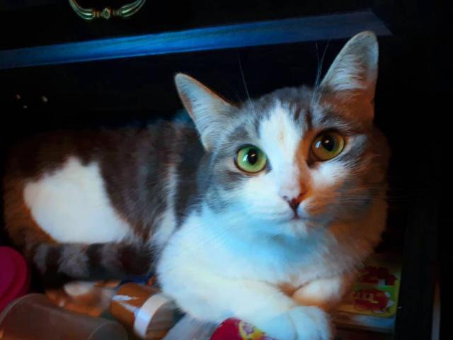 Отдам в дар: Кошечки ищут дом