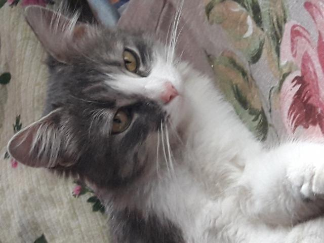Потерялся/Нашелся: Ищу хозяина кошечке-подростку
