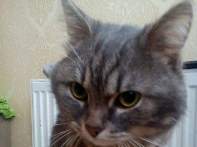 Потерялся/Нашелся: Пропал домашний кот