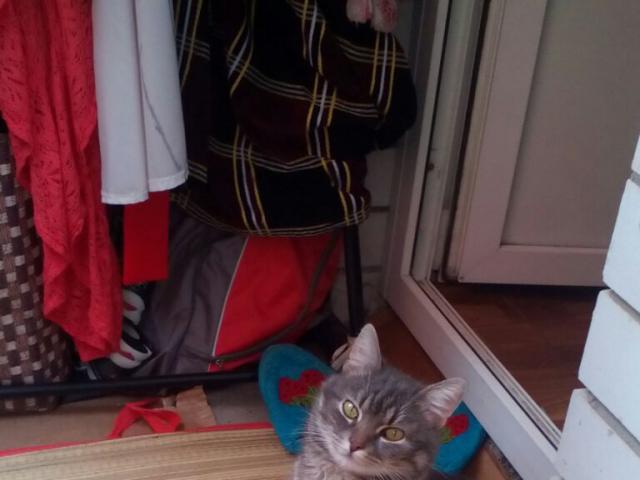 Потерялся/Нашелся: Пропал домашний кот  фото3