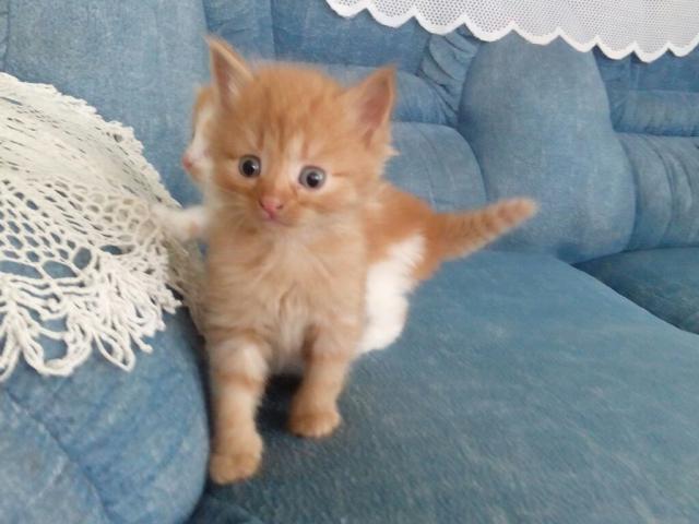 Отдам в дар: отдам котенка фото2