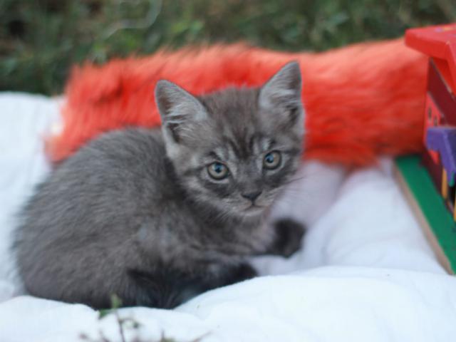 Отдам в дар: Котенок в добрые руки фото2