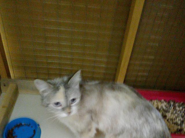 Отдам в дар: Очаровательная молодая умная кошечка в добрые руки фото2
