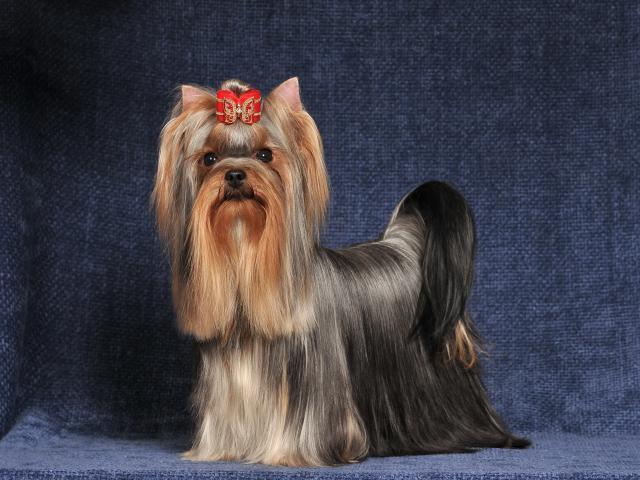 Предлагаю услуги: стрижка собак и щенков
