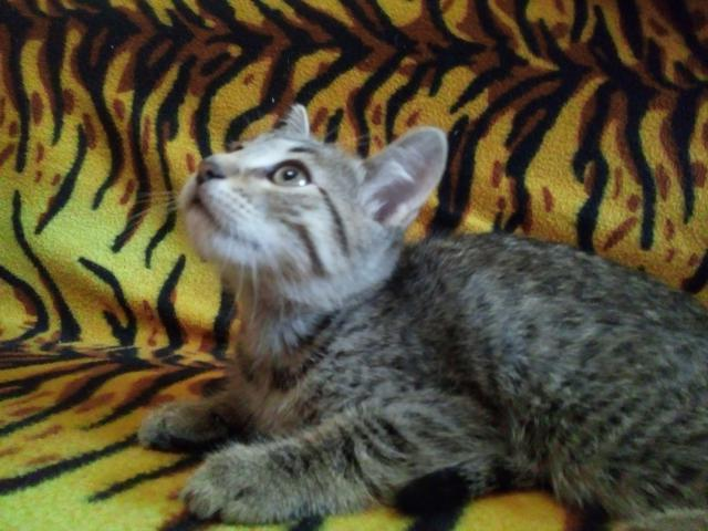 Отдам в дар: Ласковые и игручие котята ищут дом фото2