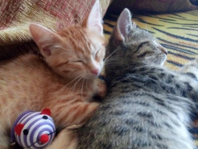 Отдам в дар: Ласковые и игручие котята ищут дом фото3