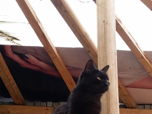 Отдам в дар: Кошка из приюта в дар фото2