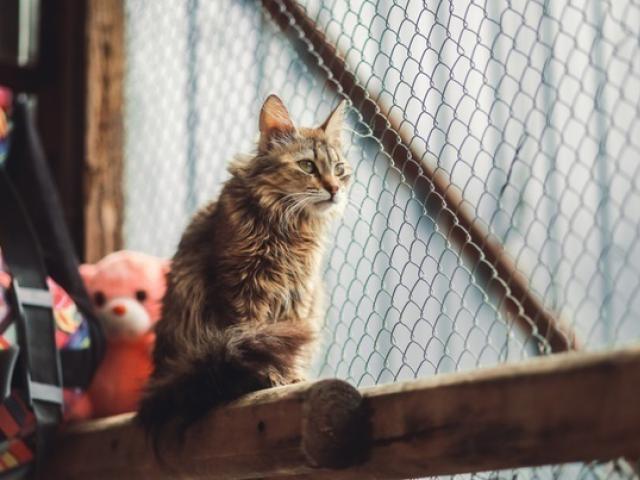 Отдам в дар: Кошка из приюта в дар