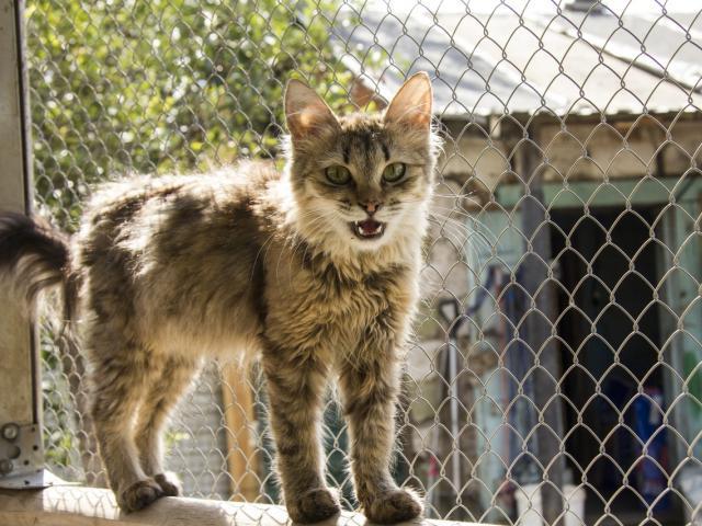 Отдам в дар: Кошка из приюта в дар фото3