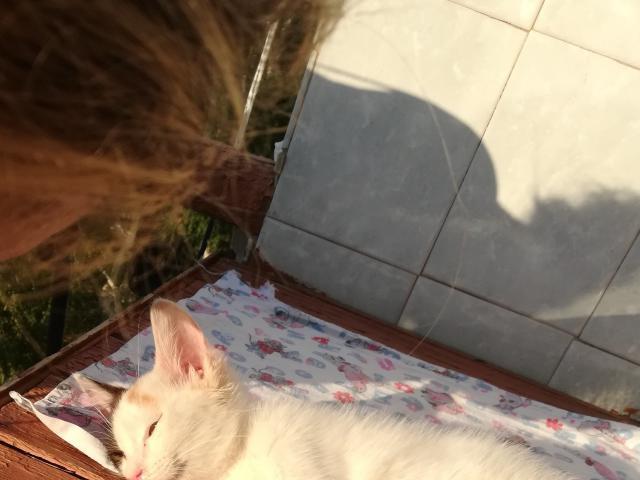 Отдам в дар: Нежная, ласковая кошечка ищет дом фото3