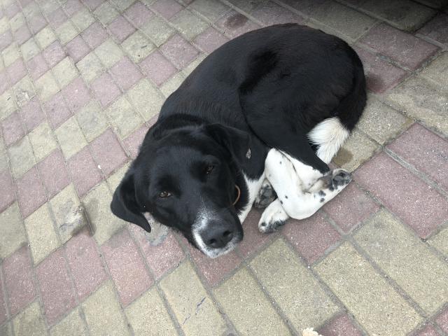 Потерялся/Нашелся: Потерянный пёс на площади Победы фото2