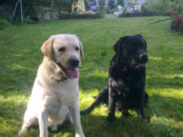 Предлагаю услуги: Передержка домашних животных в частном доме