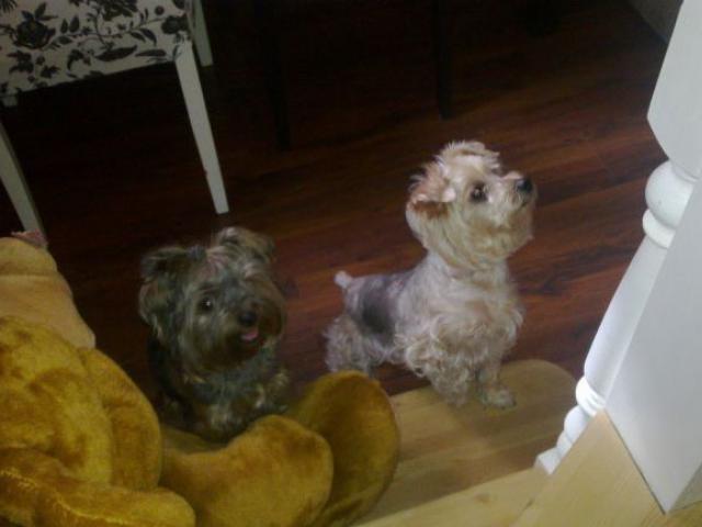 Предлагаю услуги: Передержка домашних животных в частном доме фото2