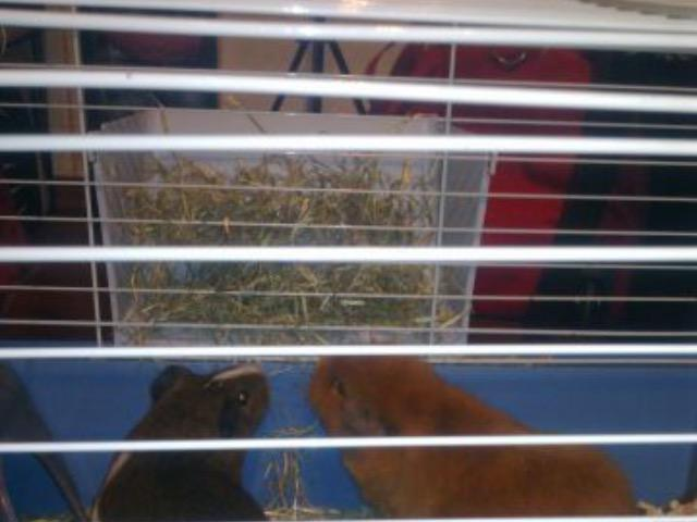 Предлагаю услуги: Передержка домашних животных в частном доме фото3