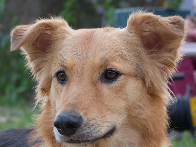 Предлагаю услуги: Передержка собак любых пород фото2