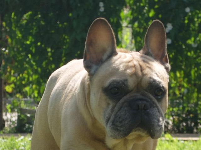 Предлагаю услуги: Передержка собак любых пород фото3