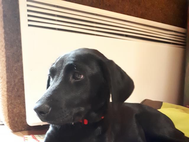 Отдам в дар: щенок в дар фото2