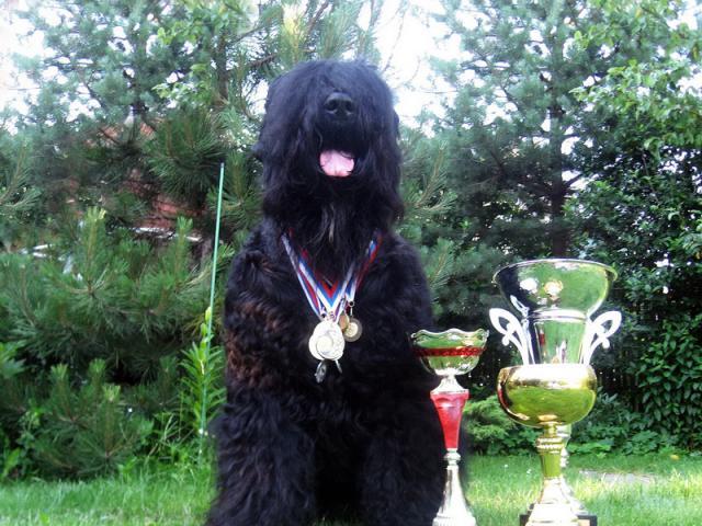 Продаю: Питомник продает щенков Русского черного терьера фото2