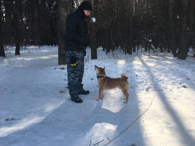 Предлагаю услуги: Дрессировка и послушание собак Кинолог