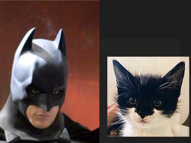 Отдам в дар: Бэтмен ищет семью