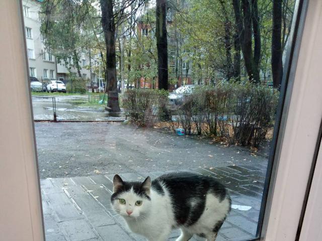 Потерялся/Нашелся: ищем тёплый дом для котика