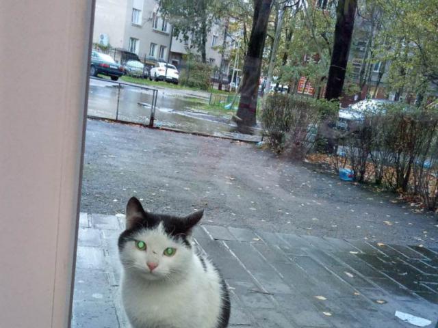 Потерялся/Нашелся: ищем тёплый дом для котика фото2
