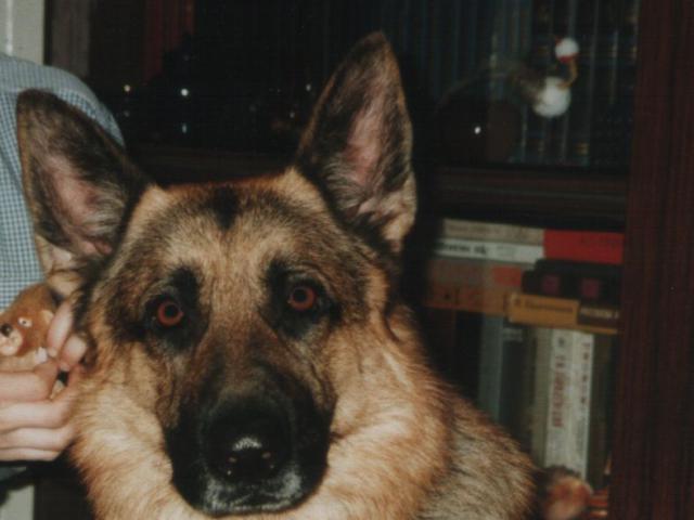 Предлагаю услуги: Передержка собак в Москве в домашних условиях