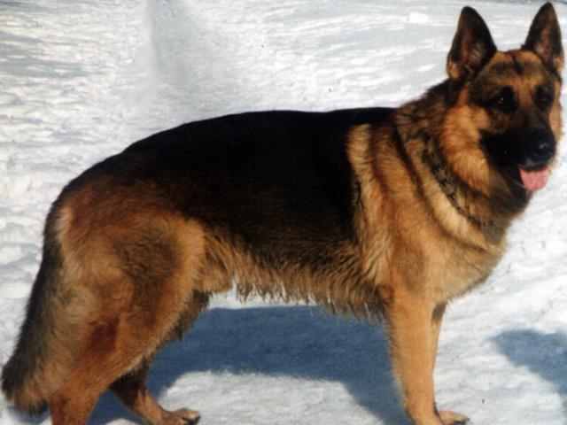 Предлагаю услуги: Передержка собак в Москве в домашних условиях фото3