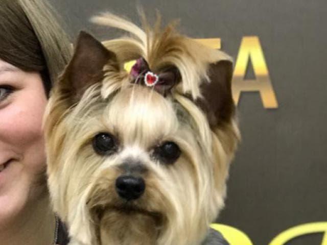 Предлагаю услуги: Стрижка собак на дому фото2