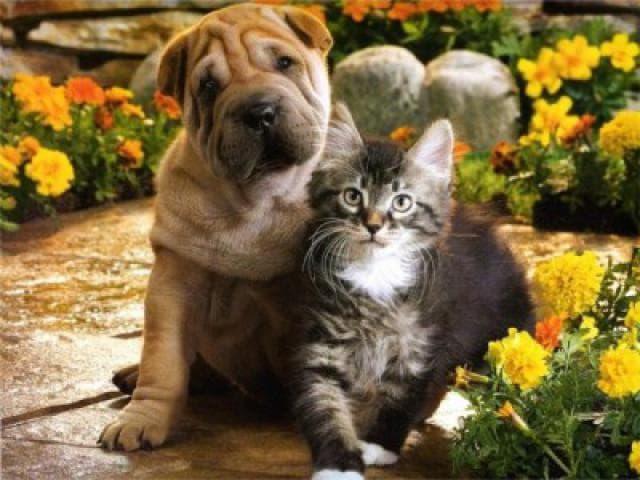 Предлагаю услуги: Ветеринарная вызывная служба Динго
