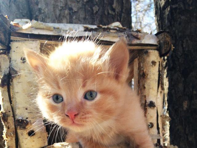 Отдам в дар: Котёнок ищет друга