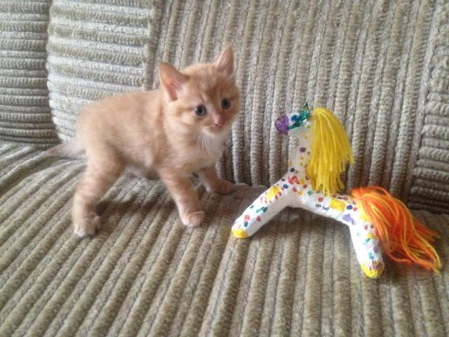 Отдам в дар: Котёнок ищет друга фото2