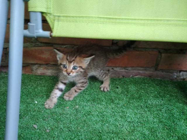Отдам в дар: котята ищут дом фото2