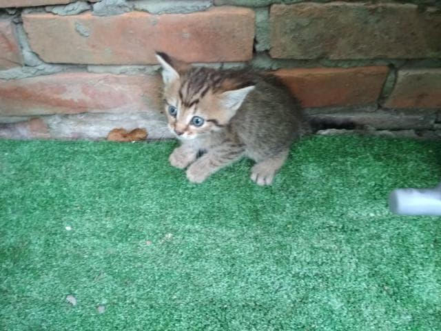 Отдам в дар: котята ищут дом фото3