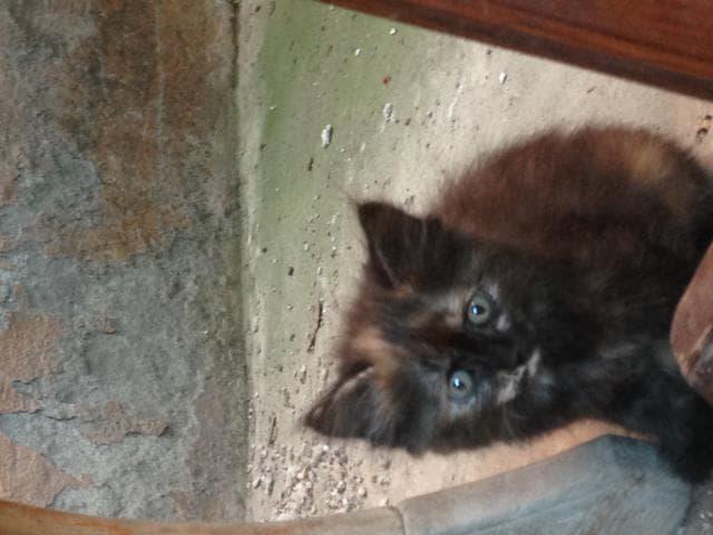 Отдам в дар: котята ищут дом